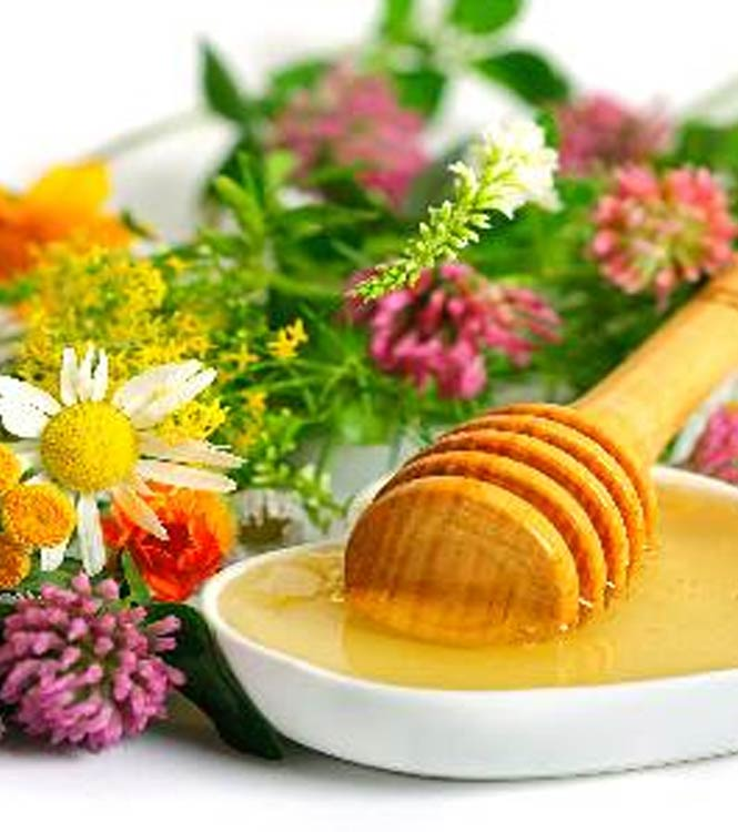 Honey suppliers India,multiflora honey distributors,eucalyptus honey